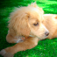 Artificial Grass is Great for Pet Owners