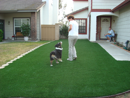artificial grass dog