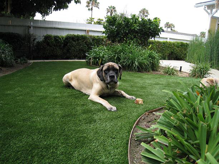 artificial grass dog4