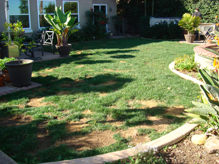 Before Synthetic Lawn